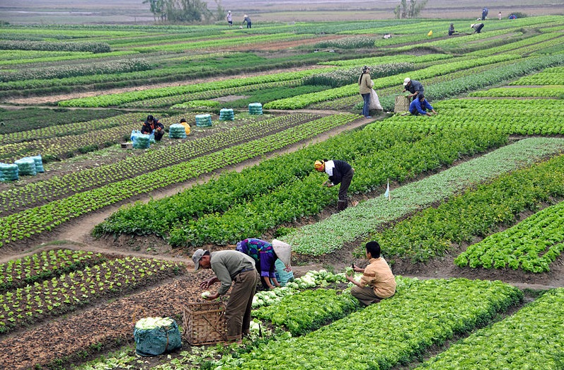 Agriculture in developing countries